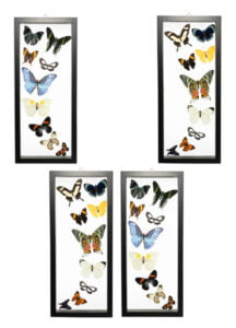 Butterfly-Connection-Sample-Frame-Sets-100