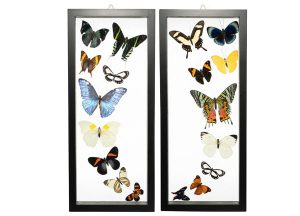 Butterfly-Connection-Sample-Frame-Sets-102