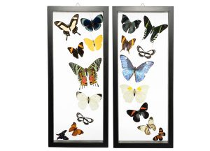 Butterfly-Connection-Sample-Frame-Sets-103