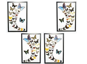 Butterfly-Connection-Sample-Frame-Sets-104