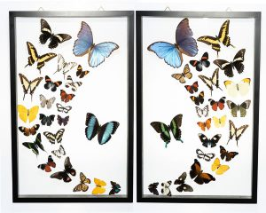 Butterfly-Connection-Sample-Frame-Sets-106