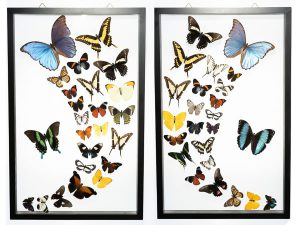 Butterfly-Connection-Sample-Frame-Sets-107