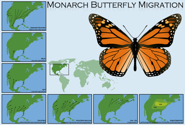 - The Butterfly Connection - Blog