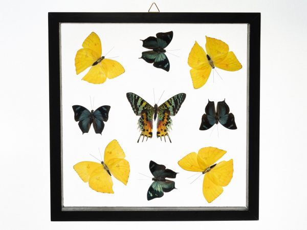 - The Butterfly Connection - 9 Count Real Glass Framed Butterfly 11 x 11