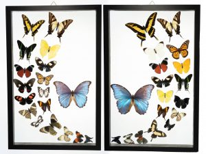 - The Butterfly Connection - Shop Now