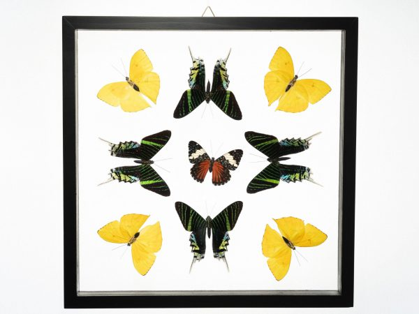 - The Butterfly Connection - 9 Count Real Glass Framed Butterfly 13 x 13