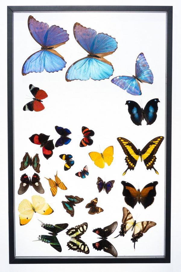 - The Butterfly Connection - 24 Count Spiral Frame 15x24