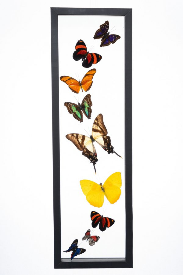 - The Butterfly Connection - 9 Count Real Glass Framed Butterfly 18 x 5