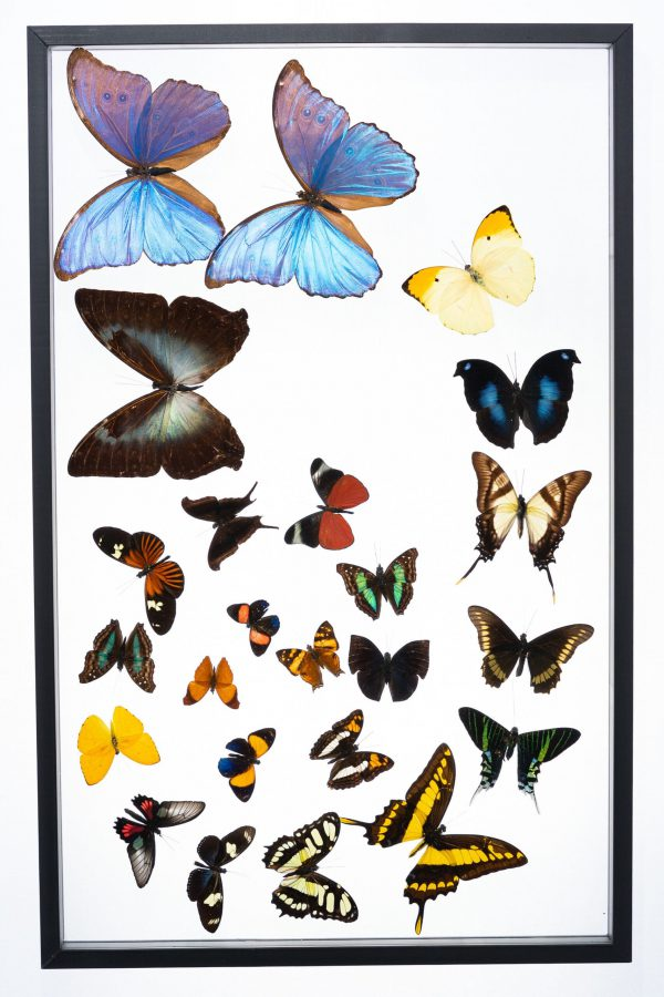 - The Butterfly Connection - 24 Count Spiral Frame 15x24 (Copy)
